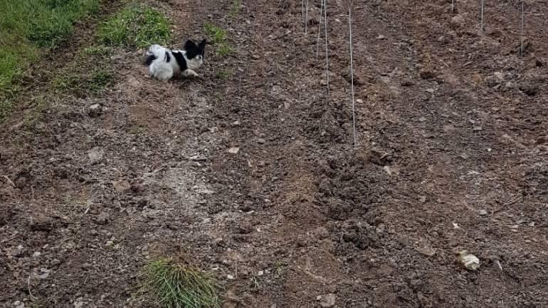 Neupflanzung im Silberberg